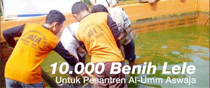 10.000 Benih Lele Untuk Pesantren Al-Umm Aswaj