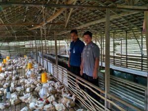 YBM_Berdayakan Pesantren Melalui BUMP Ternak Ayam Pedaging1