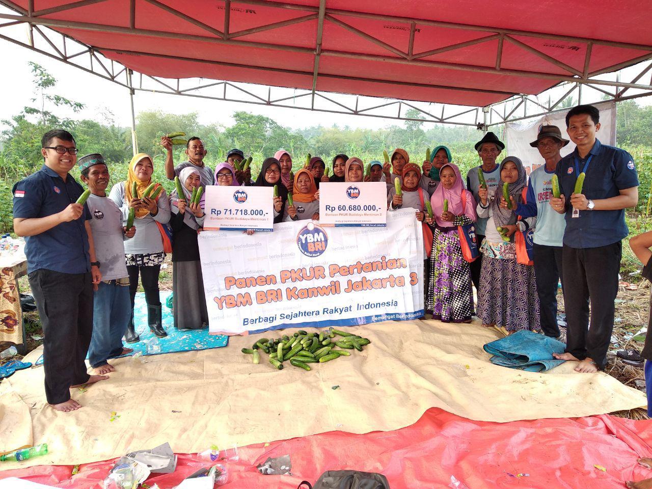 Launching dan Panen PKUR YBM BRI Kanwil Jakarta 3