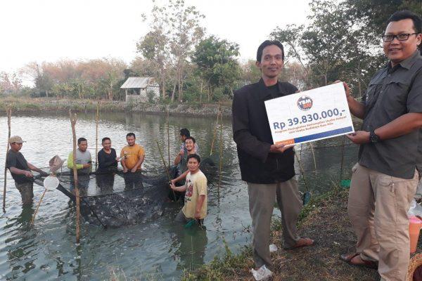 Panen Ikan Nila Desa Margoanyar