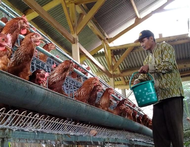 Ayam Bawa Rezeki